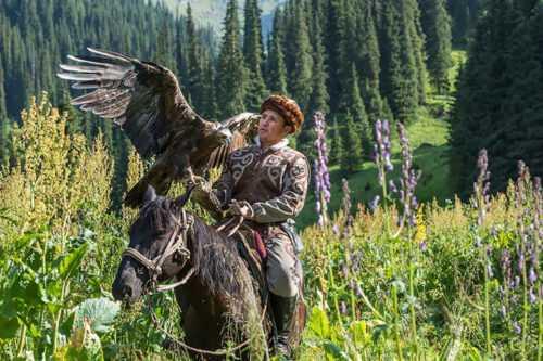 Ханская охота: как в Казахстане приручают ловчих птиц