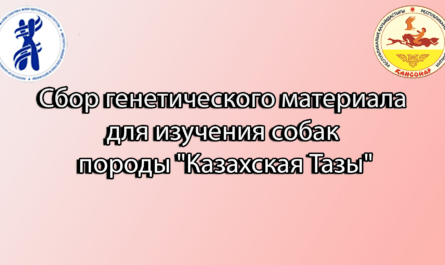 """Сбор генетического материала для изучения собак породы """"Казахская Тазы"""""""