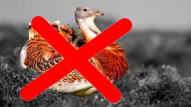 Шейхи из ОАЭ дают Казахстану миллионы за убийство краснокнижных птиц