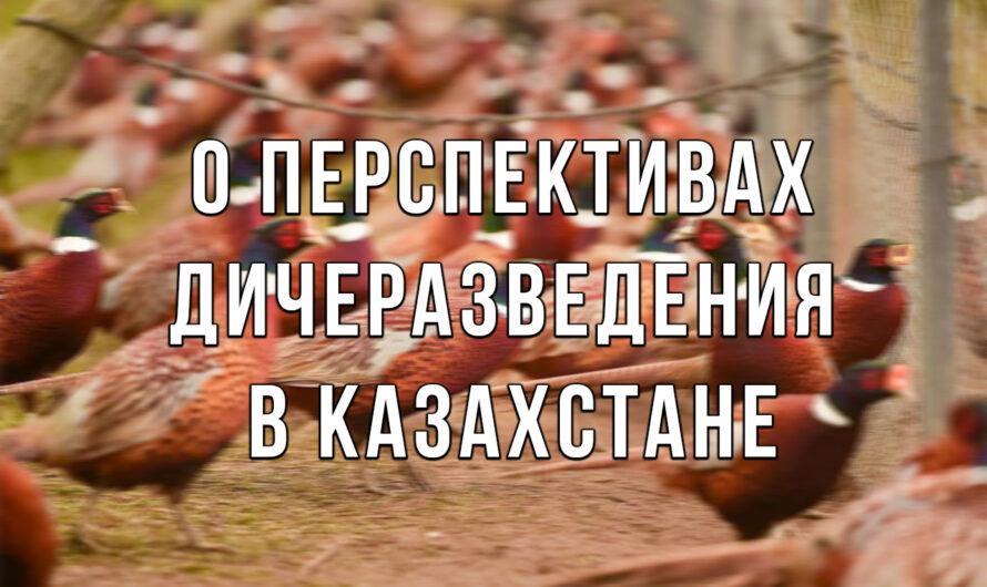 О перспективах дичеразведения в Казахстане