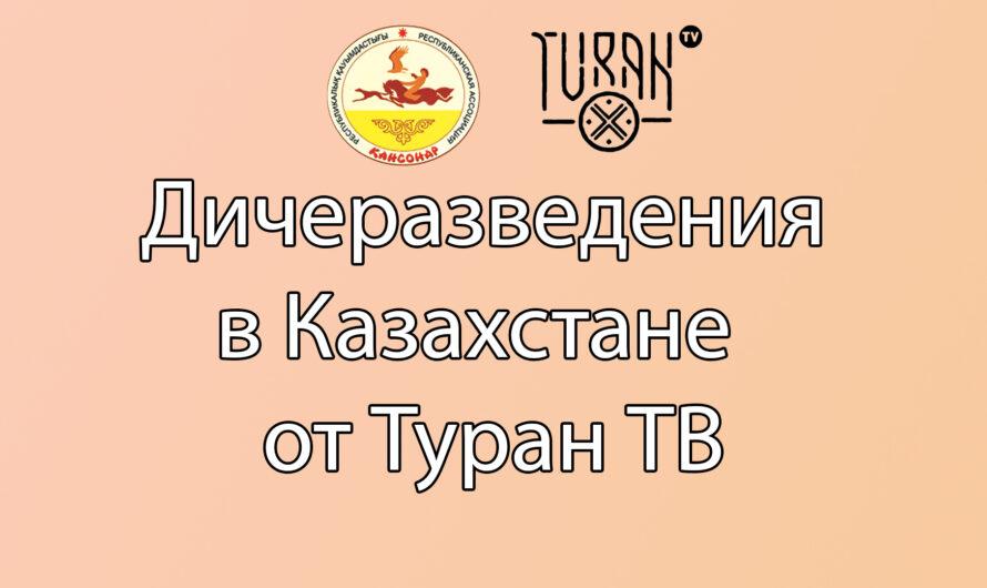 Дичеразведения в Казахстане от Туран ТВ